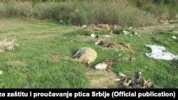 Životinjski otpad u Srbiji, Foto: Društvo za zaštitu i proučavanje ptica Srbije
