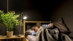 Quiz - Napping May Improve Learning, Memory