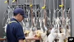 California'nın Rosemead kentinde tavuk kesim yerinde çalışan bir Çinli göçmen