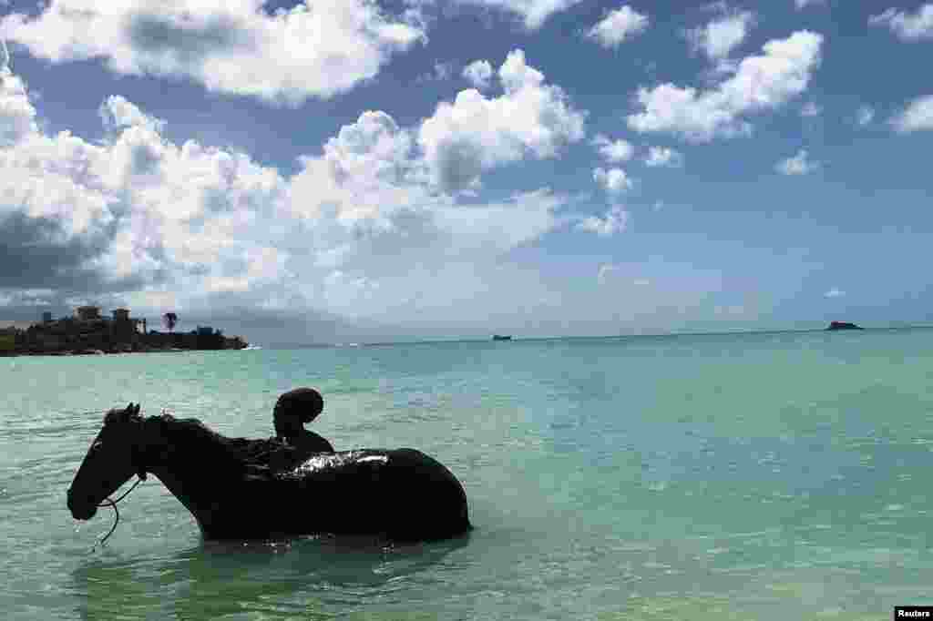 A man is seen bathing a horse in Dickenson Bay, on the northwestern coast in Antigua, a month after Hurricane Irma struck the Caribbean island near St. Johns, Antigua and Barbuda.