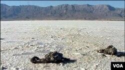 Urmiyə Gölü dünyanın ən sürətlə quruyan göllərindən biri hesab edilir