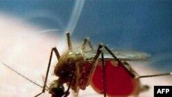 Cuộc chiến chống bệnh sốt rét ít tiến bộ