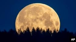 The full moon sets behind trees in the Taunus region near Frankfurt, Germany, Thursday, May 7, 2020.