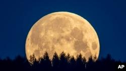 The full moon sets behind trees in the Taunus region near Frankfurt, Germany, Thursday, May 7, 2020. (AP)