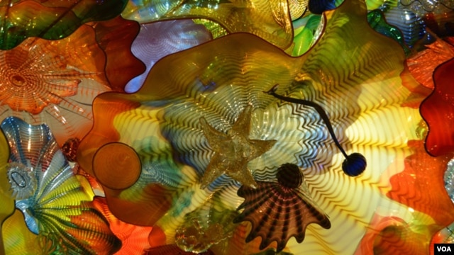 Chihuly has been creating Persian Ceilings since 1992, but each is unique. In this detail, you can see a starfish, one of many hidden objects among the 1000 pieces of glass. (VOA/S. Logue)