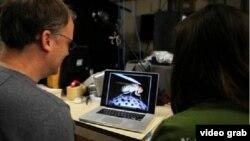 Các nhà khoa học tại Đại học Standford nghiên cứu não của ruồi để tìm hiểu rõ hơn về bộ não con người