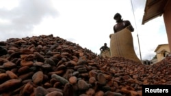 FILE - Men pour out cocoa beans to dry in Niable, at the border between Ivory Coast and Ghana, June 19, 2014.