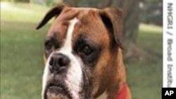 خون خوار کتے پالنے پر پابندی