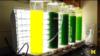 Peneliti Michigan Ubah Lumut Jadi Minyak Mentah dalam 60 Detik