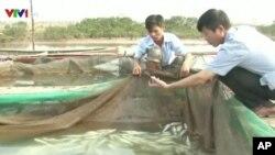 Vụ cá chết hàng loạt ven biển 4 tỉnh từ Hà Tĩnh đến Thừa Thiên-Huế đã làm tê liệt các hoạt động ngư nghiệp của các tỉnh. (Ảnh tư liệu)