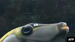 水族馆里的热带鱼