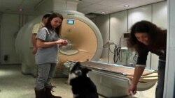นักวิจัยศึกษากระบวนการทางสมองของสุนัขที่สะท้อนการรับรู้ด้านอารมณ์ซึ่งคล้ายกับของมนุษย์มาก