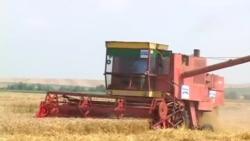 Bujqësia në Kosovë