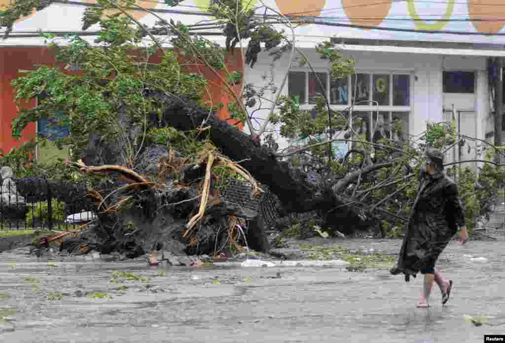A man walks past a tree uprooted by strong winds brought by super Typhoon Haiyan that hit Cebu city, central Philippines, Nov. 8, 2013.