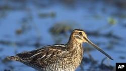 ماحولیاتی تبدیلیوں سے پرندوں کی بقا کو خطرہ