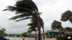 在飓风马修到来之前,佛州维罗海滩的棕榈树被风吹歪(2016年10月6日)