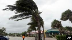 Pohon-pohon palem ditiup angin kencang di Pantai Vero, Florida, menjelang datangnya Badai Matthew (6/10).