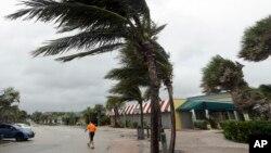 Cây cọ bị gió thổi ở Biển Vero, Florida, ngày 6/10/2016.