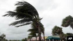 """Palm pod udarima vetra na Floridi pred dolazak uragana """"Metju"""" (AP Photo/Lynne Sladky)"""