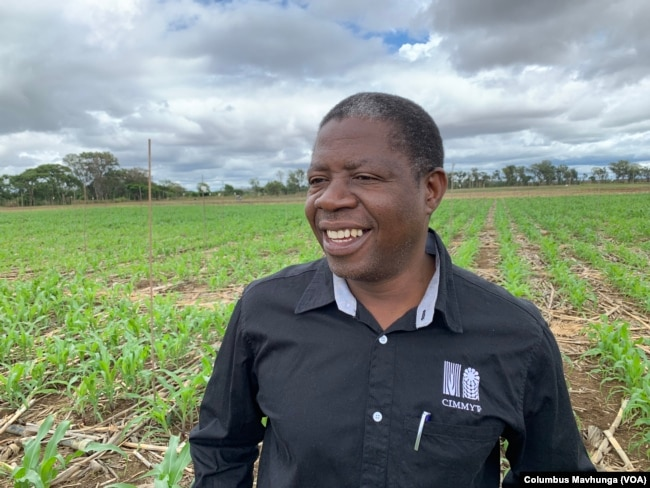 Isaiah Nyagumbo an agronomist at International Maize and Wheat Improvement Center in Mazowe on Dec. 10, 2018, says with conservation agriculture we are also minimizing the amount of run off out of the system.