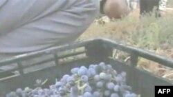 Një komunitet fermer në Izrael përqafon metodat e prodhimit organik