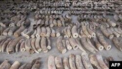 ဇူလိုင္လ တုန္းက စကၤာပူမွာ ဆင္စြယ္တန္ခ်ိန္ ၉ တန္နီးပါး ဖမ္းဆီးရမိ