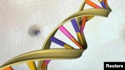 Tòa án Tối cao nói rằng, 'đoạn DNA xảy ra tự nhiên là một sản phẩm của thiên nhiên và không đủ điều kiện để được cấp bằng sáng chế chỉ vì nó được tách ra.'