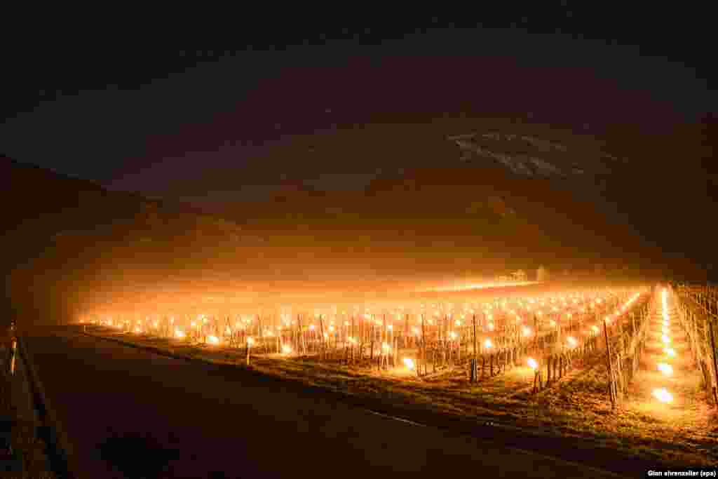 Anti-frost candles burn in a vineyard in Flaesch, in the Swiss canton of Grisons. Due to unseasonally low temperatures, wine growers are attempting to protect their grape shoots with additional warmth from the anti-frost candles.