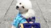 Kimono, Andalan Toko Aksesori Hewan Peliharaan Selama Olimpiade Tokyo