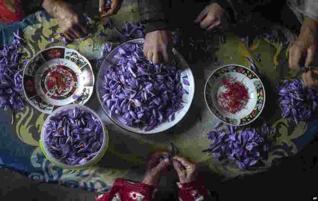 په مراکش کې بزګران د زعفرانو ټول کړي حاصلات پاکوي