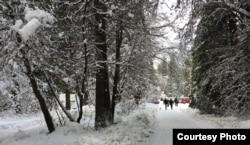 Tuyết phủ đầy những hàng cây (ảnh Bùi Văn Phú)