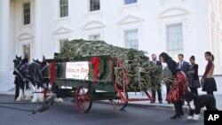 Đệ nhất Phu nhân Michelle Obama cúi xuống ngửi mùi thơm của cây thông cao gần 6 mét đến từ tiểu bang North Carolina, 23/11/2012