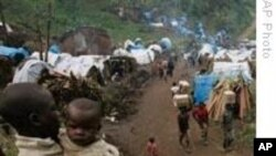 Des déplacés congolais campant dans la forêt (Archives)