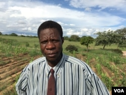 Taringana Makiwa, an official with the state-owned Agricultural Extension Service, is shown in a field in Chivi, Zimbabwe, in March 2016. (S. Mhofu/VOA)