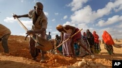 In this photo taken Wednesday, March 8, 2017, men dig with shovels and women take away the earth to build a dam so that if rains do come the water can be stored near Bandar Beyla in Somalia's semiautonomous northeastern state of Puntland.