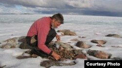 El profesor Gifford Miller recogiendo muestras de musgo muerto bajo la capa de hielo de la isla de Baffin. (Foto: Cortesía de Gifford Miller, Universidad de Colorado, Boulder).