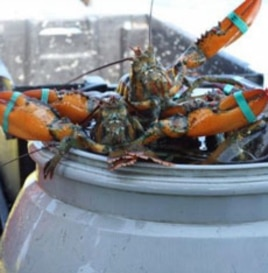 In the 1980s, 80 lobster boats could be found in Boston Harbor. Today, there are 27.