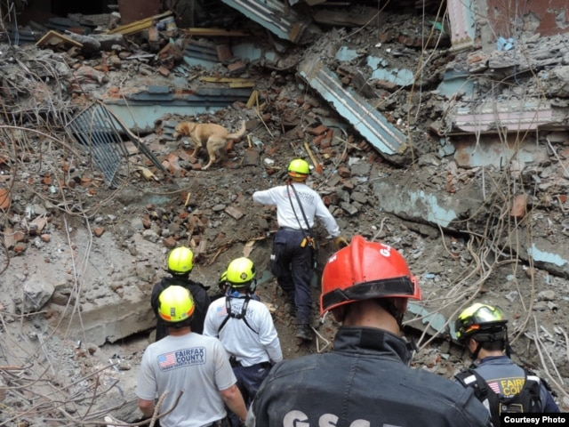 Pryse, a Labrador retriever with a search-and-rescue team from Virginia, looks for survivors after an earthquake in Nepal in April 2015. (Credit: Fairfax Fire & Rescue)