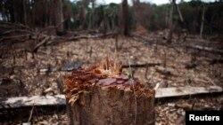 Les crédits carbones pourraient décourager les coupes sauvages en Afrique de l'Ouest, telle que ce site en Sierra Léone
