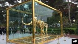 """ماکت اسکلت یک ماموت پشمالوی ماقبل تاریخ با عنوان """"رفته، اما فراموش نشده"""" در نمایشگاهی در جنوب فرانسه"""