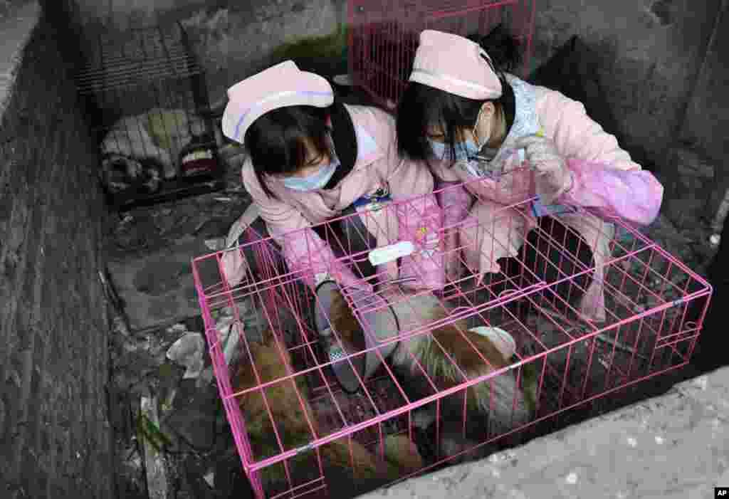 Các tình nguyện viên chăm sóc những con chó được giải cứu từ một trại nuôi lợn bị bỏ hoang ở Trùng Khánh, Trung Quốc, ngày 17/2/2012