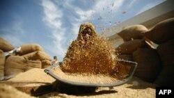 Một người đang sàng gạo tại khu chợ ở Bavla, Ahmedabad, Ấn Độ.