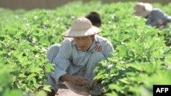 Tư liệu- Một người nghiện heroin làm việc tại 1 trung tâm cai nghiện bên ngoài Hà Nội.