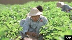 Một người nghiện heroin làm việc tại 1 trung tâm cai nghiện bên ngoài Hà Nội, 9/7/1999