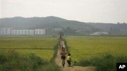 북한 남포시의 한 농장. (자료사진)