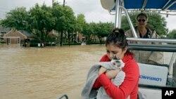 허리케인 '하비'로 홍수 피해를 입은 미국 텍사스주 휴스턴에서 29일 한 여성이 애완 고양이와 보트를 타고 침수 지역을 빠져나오고 있다.