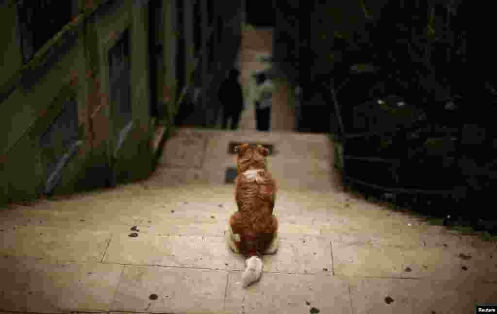 Pas na nekim stepenicama u Alfami, jednom od kvartova portugalskog Lisabona.