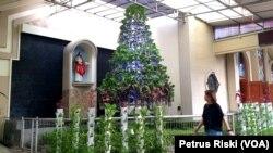 Pohon Natal sayuran hidroponik menghiasi halaman depan gedung gereja Katolik Paroki Kristus Raja di Surabaya, Jawa Timur. (Foto: Petrus Riski/VOA)