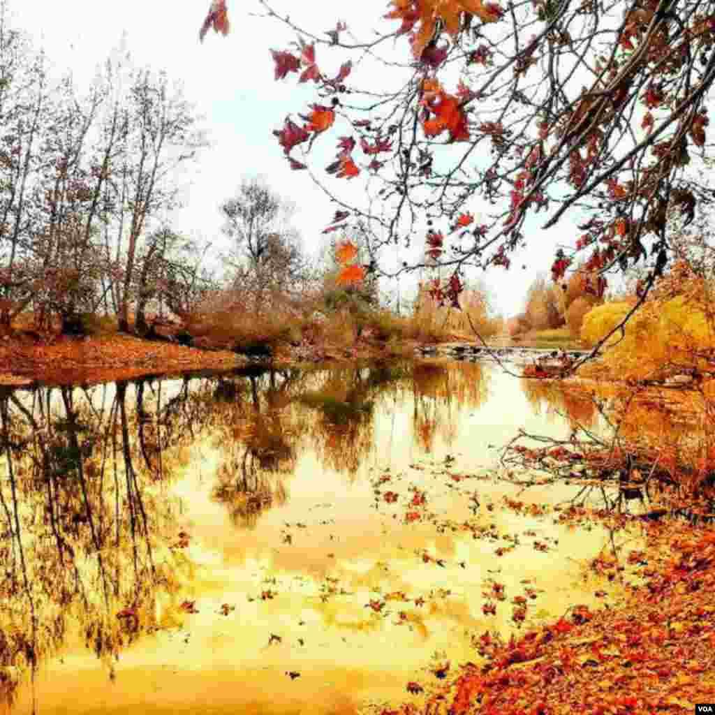 طبیعت پاییزی باغ بهادران اصفهان، رودخانه زاینده رود عکس: عرفان عابدیان (ارسالی شما)