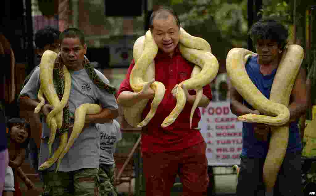Zoo owner Manny Tangco (C) carries albino Burmese pythons at the Malabon Zoo in Manila, the Philippines, as the world celebrates 3rd World Wildlife Day.